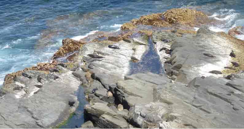 YML v/Henny Jensen enjoys the view to New Zealand fur seals on Kangaroo Island, Australia