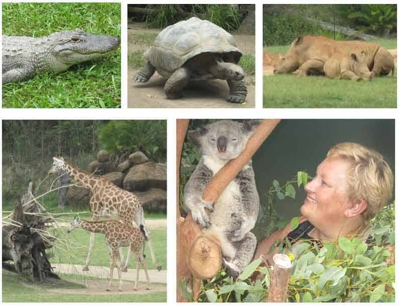 Your Missing Link visits Australia Zoo, the life's work of the late Steve Irwin