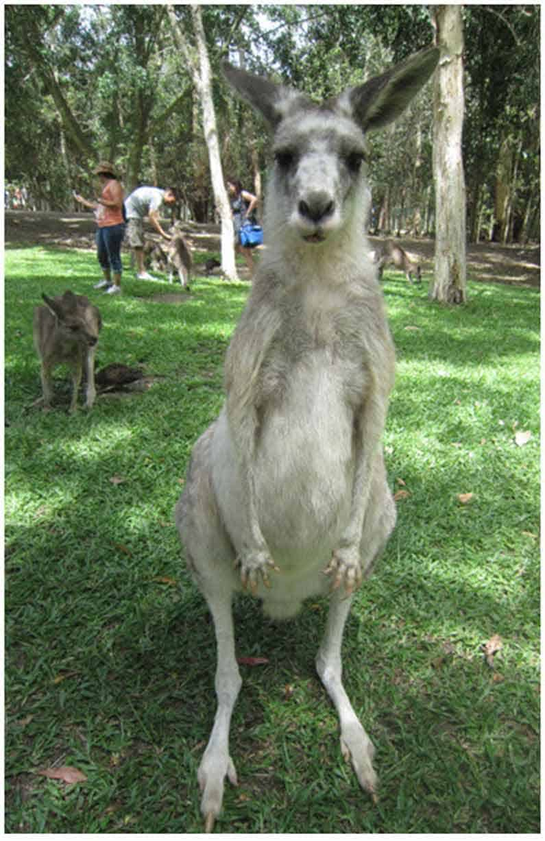 Henny Jensen greets this adorable and very friendly kangaroo at Australia Zoo, posing for the camera