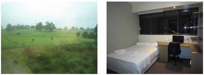 Lush and green fields in QLD and Your Missing Link's accommodation in Sydney, NSW