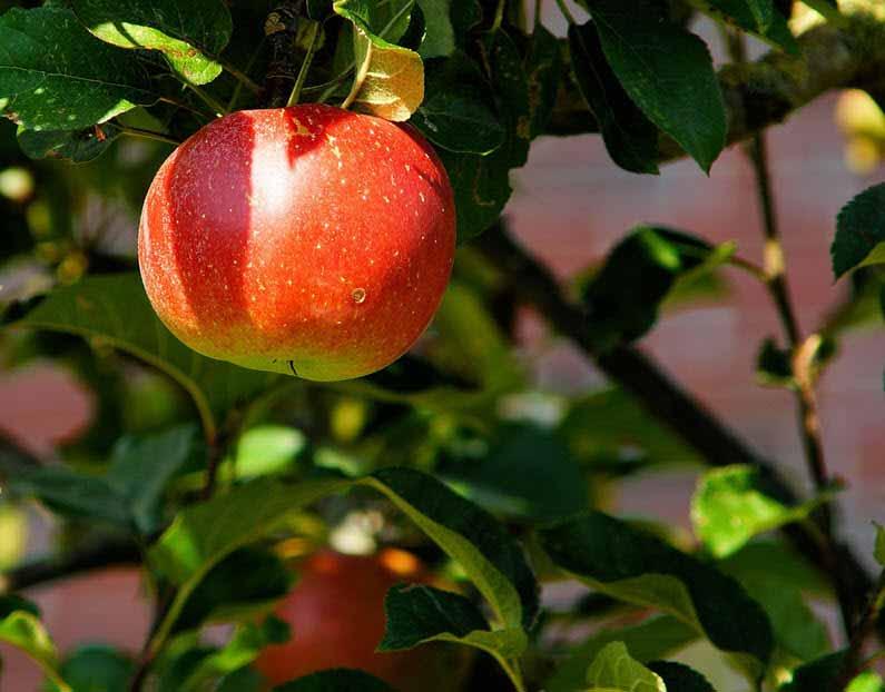 Processoptimering | Plocka de lågt hängande frukter tillsammans med Your Missing Link