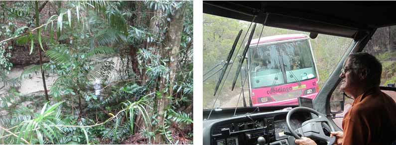 Verifying the impossible - a rainforest growing on a sandy island! On the way up we met this other bus that we had to give way for by going downhill in reverse - Your Missing Link